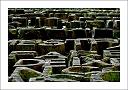 http://rodadur.free.fr/ToPhos/galleries/Divers/Series/2006_Porte_Sagrada_Familia/thumbnail/TN-2006_Barcelone_Sagrada_Familia_18.jpg